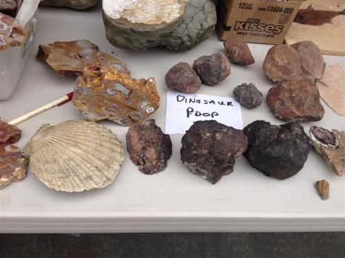 fossilized-dinosaur-poop