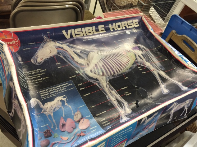 visible-horse-2